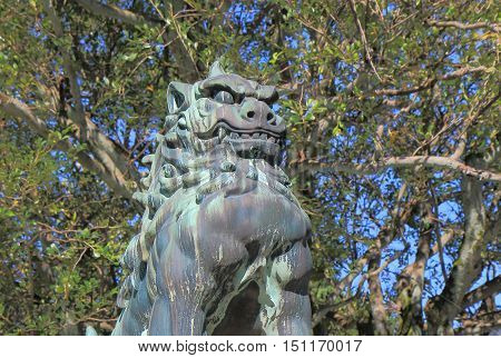 Japanese Komairu stature at Oyama Shrine in Kanazawa.Komainu called lion dogs in English, are statue pairs of lion like creatures guarding the entrance of many Japanese Shinto shrines