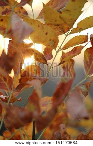 Fall leaves in the sun in october