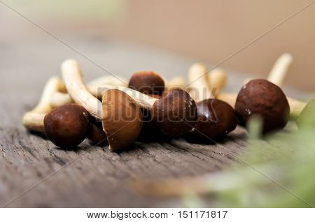 prepare mushroom for cooking, mushroom on wooden table background
