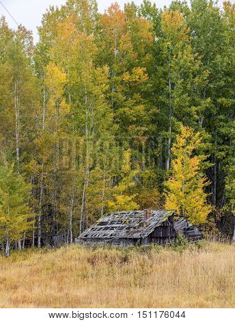 Old decrepit shed in autumn in north Idaho.