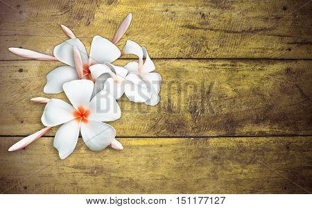 Tropical plumeria flower on old wood .for design.