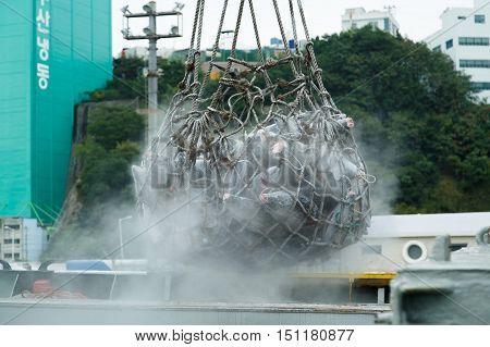 Busan South Korea - September 22th 2016: Busan fish port overload of a frozen tuna.