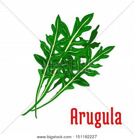Arugula vegetable icon. Isolated leafy arugula bunch. Vegetarian fresh food salad ingredient emblem for sticker, grocery shop, farm store element
