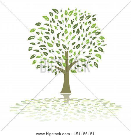 green leaves foliage summer tree ecology illustration vector