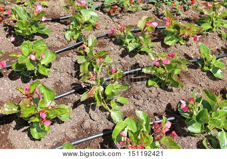 Flowerbed With Automatic Watering System And Flowers