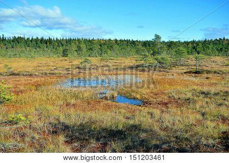 Beautiful autumnal bog landscape, Torronsuo National Park, Finland