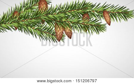 Pine tree branches with cones for christmas decorations.