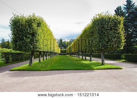beautiful summer park with topiary trees lawn and path to walk