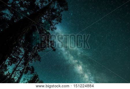 beautiful celestial view of starry night sky with milky way and a tree silhouette