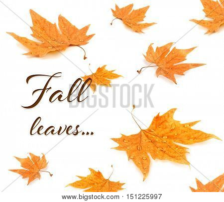 Text FALL LEAVES and yellow foliage on white background.