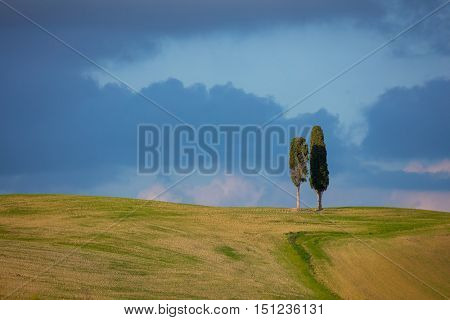 Two Tuscany cypresses trees over blue sky and clouds, minimalistic composition with copy space for text or logo, Tuscany landscape, Italy, Europe