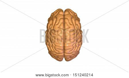 3d rendered medically accurate illustration of brain