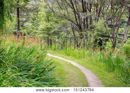 Narrow Path Surrounded By Orange Crocosmia Flowers In The Park