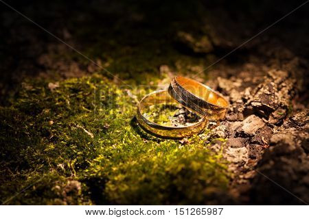 Wedding rings lying on a tree bark.
