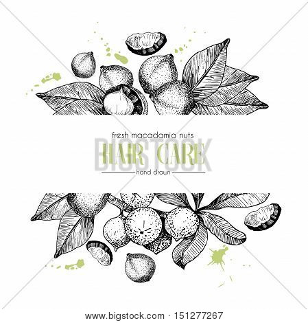 Vector set of hair care ingredients. Organic hand drawn elements. Template for macadamia branch. Use for cosmetic package shop store products spa salon wellnes program procedure skin hair care