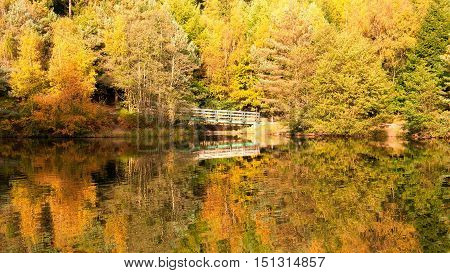 Autumn reflections in the water in the Forest of Dean.