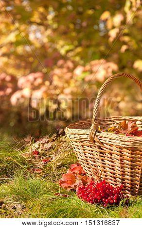 Beautiful Autumn. Autumn Harvest In Basket