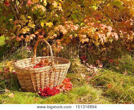 The Beautiful Autumn