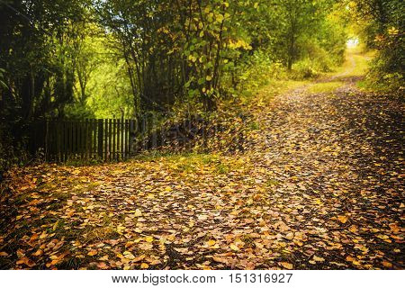 Yellow leaves on unpaved pathway. Autumn time. Moravian landscape Svitavka.