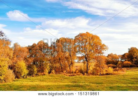 Autumn nature landscape-yellowed autumn trees in autumn sunny weather. Sunset autumn view of autumn trees lit by sunlight. Picturesque autumn view of autumn trees. Autumn nature in sunlight