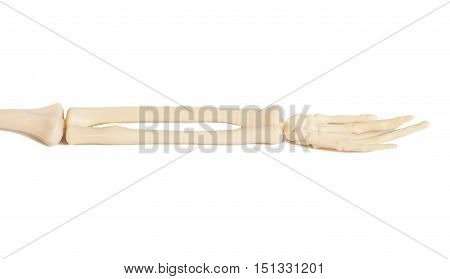 hand of bones isolated on a white
