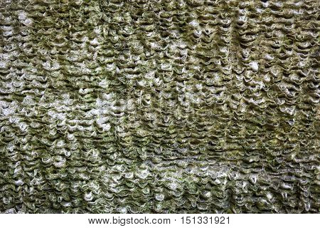 Coquina surface with rich and various texture.