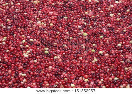 lots of fresh cranberries floating in water