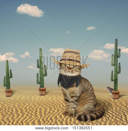 A funny cat looks like a cowboy. It is in the prairie.