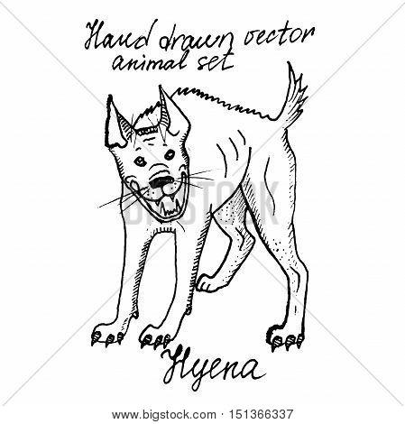 Hand drawn vector ink illustration of hyena.