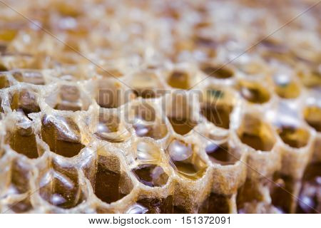 Bee Hive Texture With Honey Filled