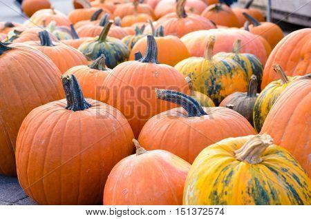 Assorted Pumpkins At A Farmers Market