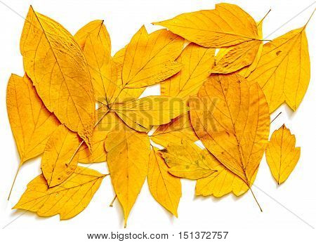 Bright yellow multicolor pressed decorative leaves oil draw painting photo manipulation