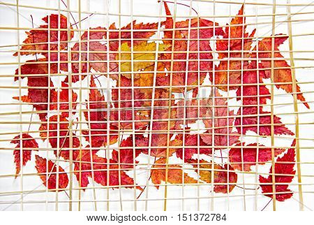 Bright red and yellow multicolor pressed decorative maple leaves under the grate of straw oil draw painting photo manipulation