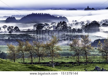 Landscape Dark moody misty background silhouetted trees in mid ground. Foreground autumn foliage trees with cows on green pasture