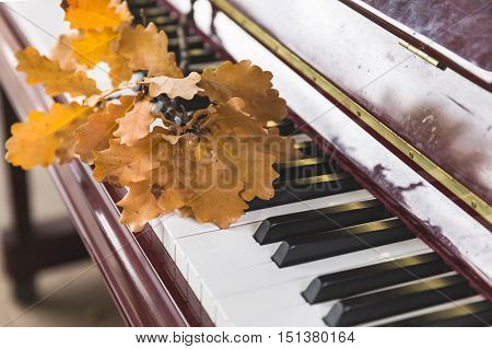 Closeup of piano keys with oak leaves on them. Music concept. Autumn