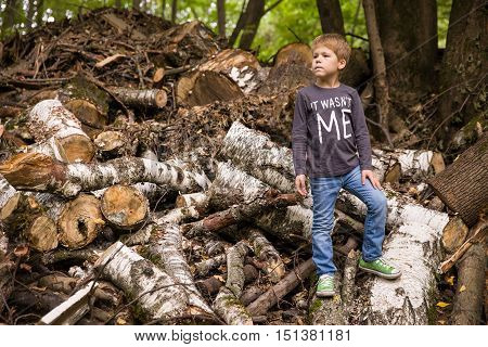 Cute kid boy standing on the pile of felled birches. Child in the forest or park. Boy playing with old fallen woods and trees.