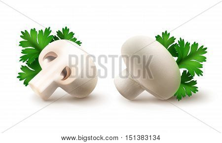 Vector Set of Fresh Whole and Sliced Half White Portabello Agaricus  Champignons Mushrooms with Green Parsley Leaves Close up Isolated on White Background