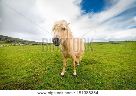 Pony free Irish beach, Ireland, Galway, August 2016