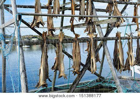 Racks full of dried codfish Nordkapp Norway