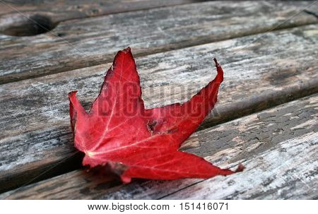Photograph of an autumn sycamore leaf on picnic bench.