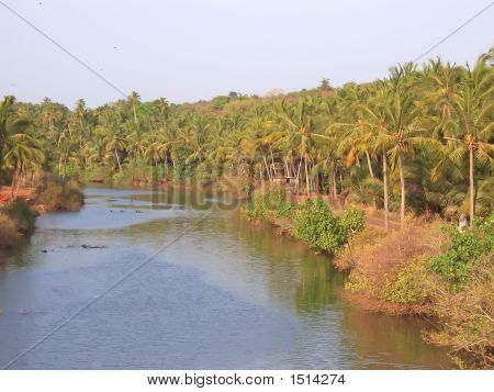 Tropical Sea Mangrove With Plam Trees, Goa, India