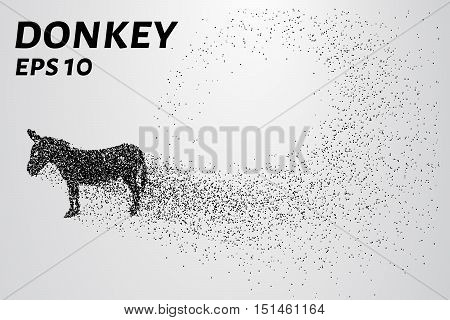 Donkey of the particles. The donkey is made up of little circles.