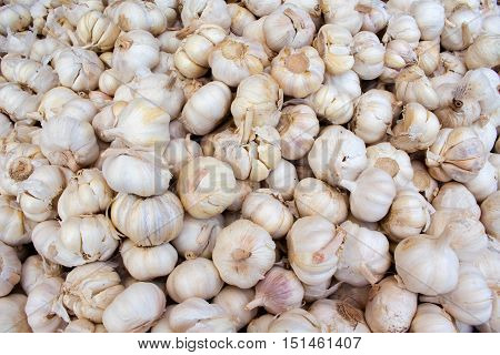 Bunch of garlic on the market. Fresh garlic harvested from the garden for sale. Vitamin healthy food spice image. Cooking ingredient picture. Pile of white garlic heads. Natural flu medicine healer
