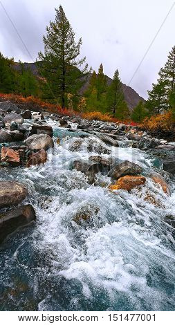 Autumn mountain river on a background of mountains and colorful trees. (Altai Russia)