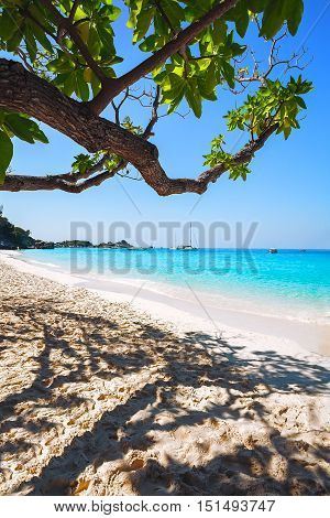 tropical seascape with sandy beach and green trees .