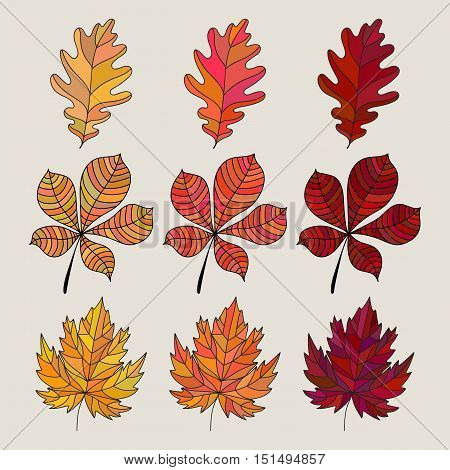 Set of colorful autumn leaves. Vector illustration. Fall leaves color gradient. 3 kind different colored leaves. Oak, maple and chestnut tree's leaf icon.