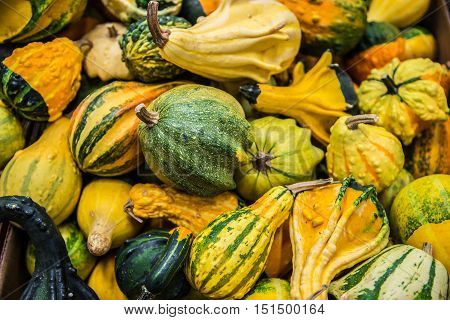 Assorted winter squash or variety of kaboocha.