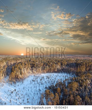 Sunset In Deep Forest