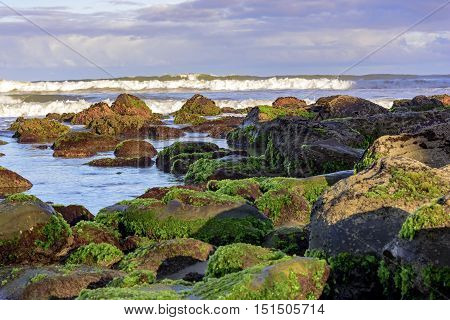 Mossy stones between the waters of the Cal Beach in Torres city Rio Grande do Sul