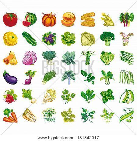 Vegetables icons flat set with radish pumpkin potato celery isolated vector illustration